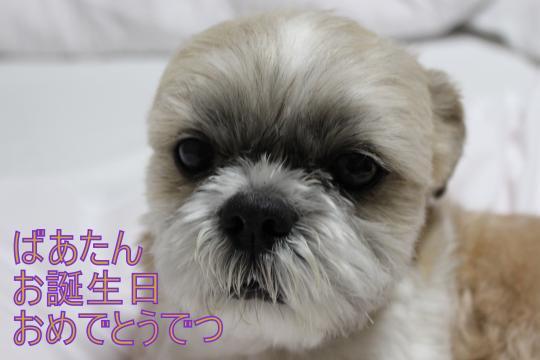 繝シ・祢MG_3285_convert_20130314000733