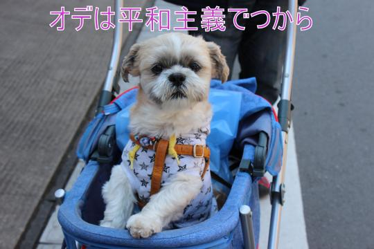 ・搾シ祢MG_3323_convert_20130316010525