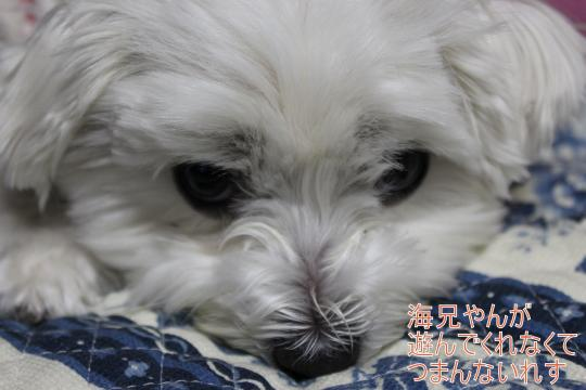 ・搾シ祢MG_3566_convert_20130321021509