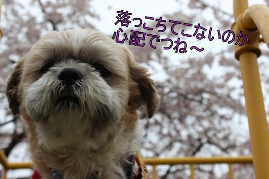 繝シ縺・MG_3787_convert_20130328004244