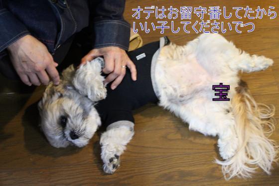 ・搾シ祢MG_4075_convert_20130328015749