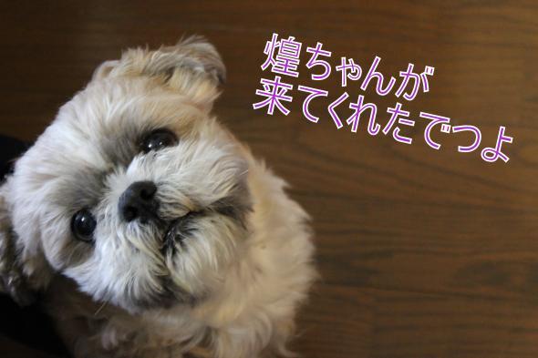 ・搾シ肘MG_4047_convert_20130328015806