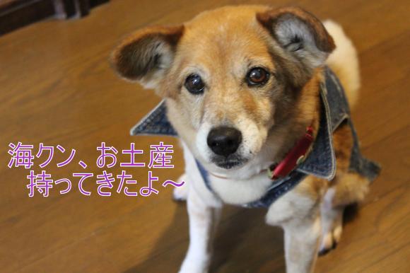 ・搾シ選MG_4046_convert_20130328015711
