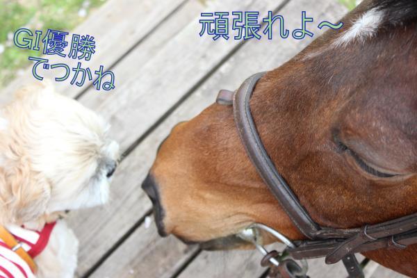 ・搾シ祢MG_3972_convert_20130402021853