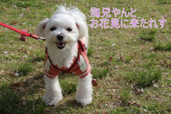 ・搾シ呻シ蝕MG_4139_convert_20130408223324