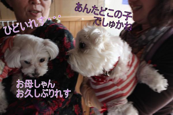 ・搾シ祢MG_4169_convert_20130408223305