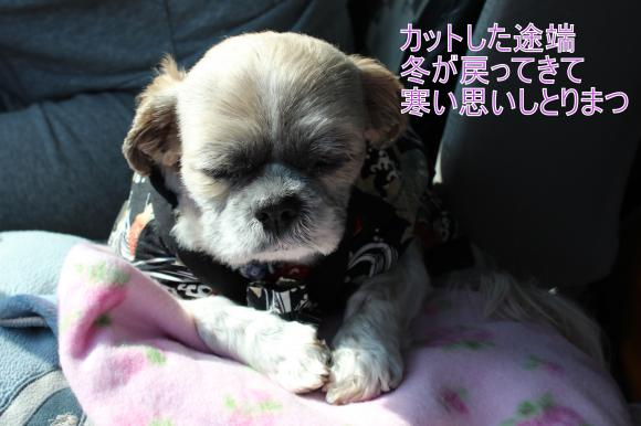 ・搾シ祢MG_4181_convert_20130411205408