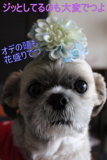 ・搾シ祢MG_4889_convert_20130423143818