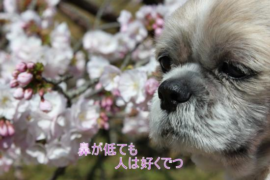 ・搾シ蝕MG_4491_convert_20130424202045