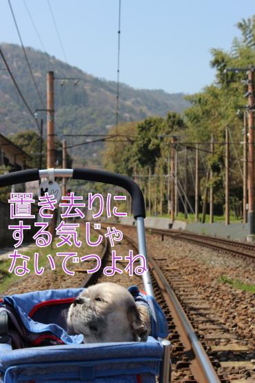・搾シ祢MG_4499_convert_20130429001740
