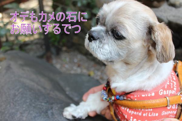 ・搾シ祢MG_4527_convert_20130429001803