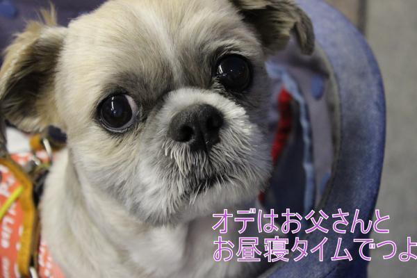 ・搾シ蝕MG_4677_convert_20130501012455