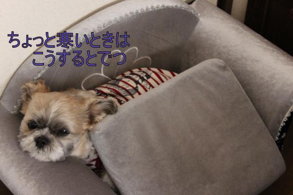 ・搾シ棚MG_4994_convert_20130508015811