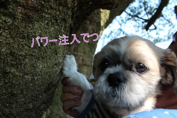 ・搾シ蝕MG_5216_convert_20130520025339