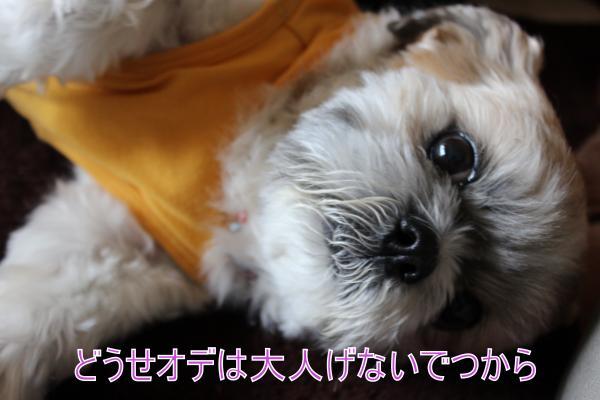 ・搾シ祢MG_5457_convert_20130523004250