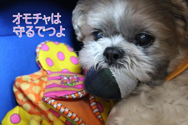 ・搾シ祢MG_5470_convert_20130523003822