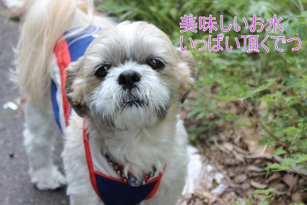 ・搾シ祢MG_5332_convert_20130526233248