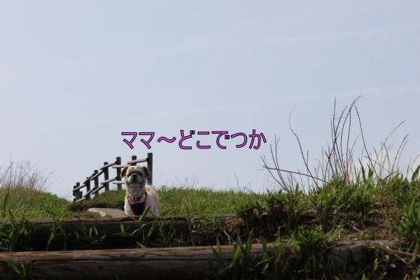 ・搾シ祢MG_5353_convert_20130526233358