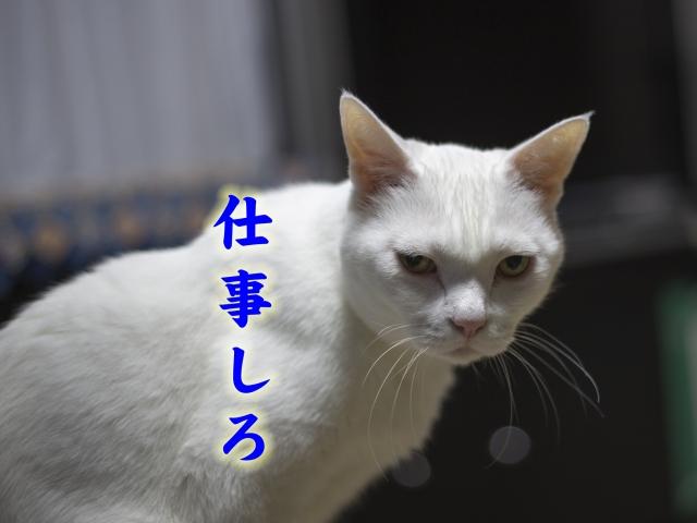 _MG_0978.jpg