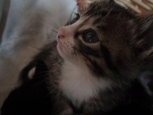 子猫 (4)