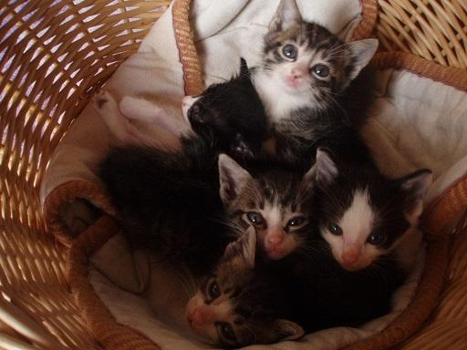 子猫 (2)