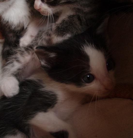 子猫 (9)