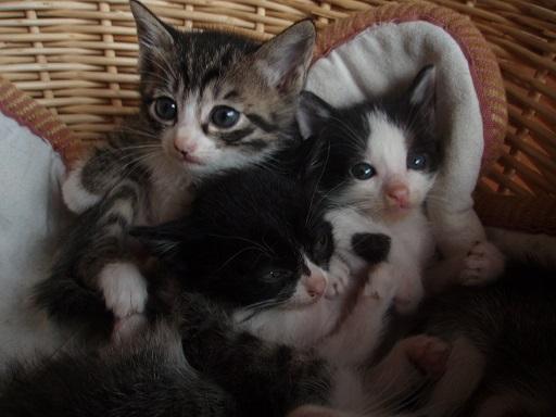 子猫 (6)