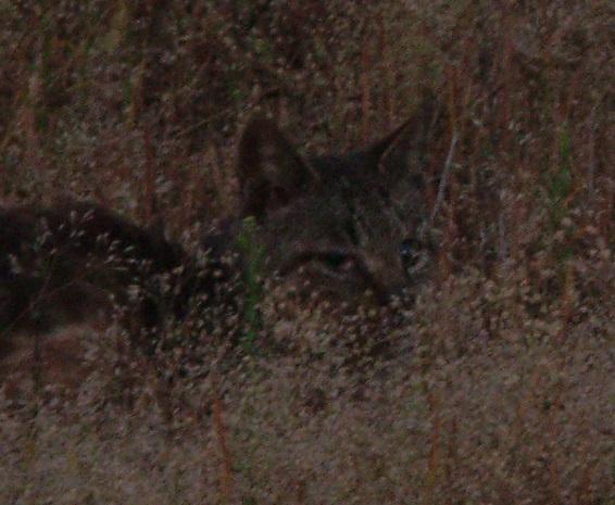 草に紛れた猫