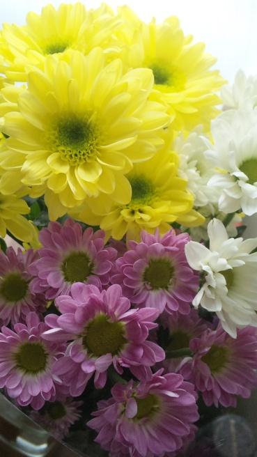 【写真で散歩】2014 1月 「花めで」菊