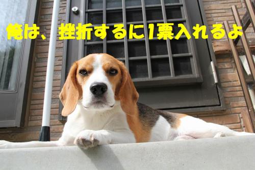 IMG_5297-1.jpg