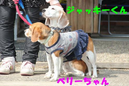 IMG_7242-1.jpg