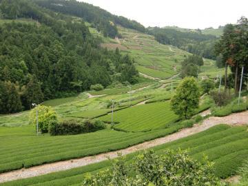緑(茶)の絨毯