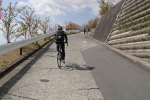 松田山の河津桜を求め