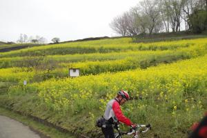 篠窪の菜の花畑