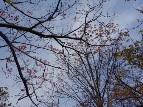 鴨到来、秋の深まり
