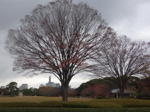 秋から冬へと皇居東御苑