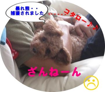 IMG_6235-crop.jpg