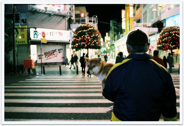 ご主人様の散歩に付き合う犬