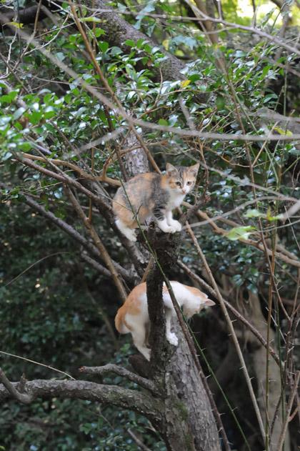 仔猫の木登り