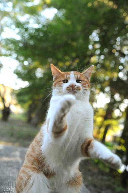 猫パンチにゃ