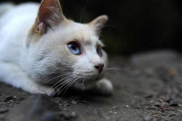 白猫のチャミ