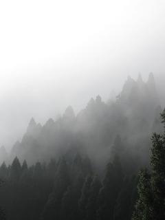 20110811-15生杉 026