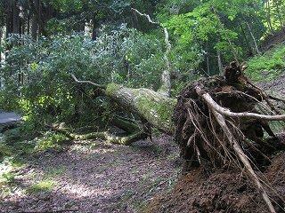 20110827,28生杉 035