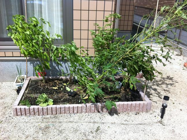 手作り花壇