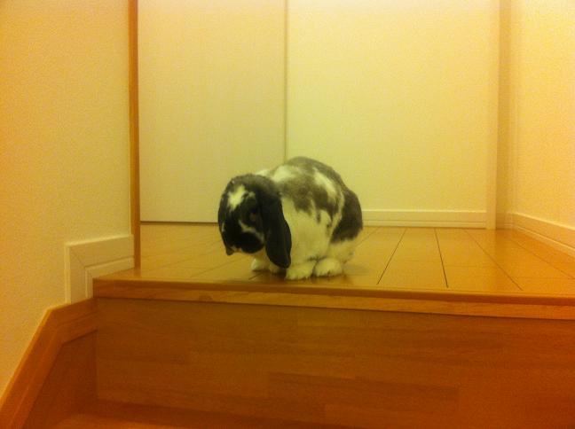 階段を登ったそら