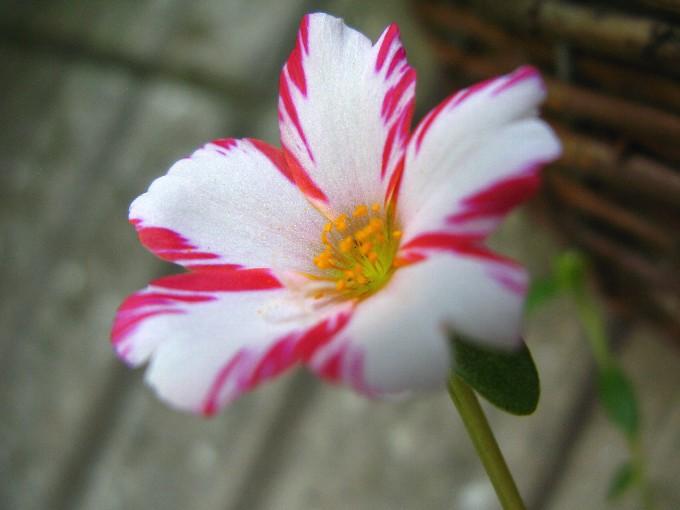 2011-7花