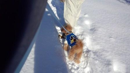 冬の散歩3