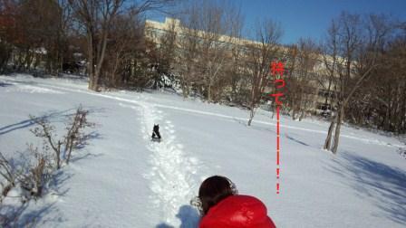 冬の散歩4