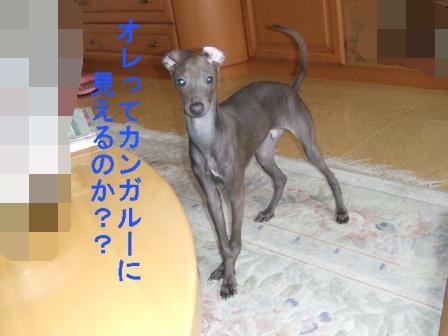 2009_0210虎太朗アンドリズム0009(2)