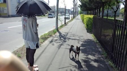 お散歩 (3)